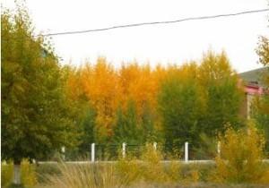осень в монголии